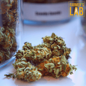 Weed Seeds Shipped Directly to Saint-Gabriel, QC. Farmers Lab Seeds is your #1 supplier to growing weed in Saint-Gabriel, Quebec.