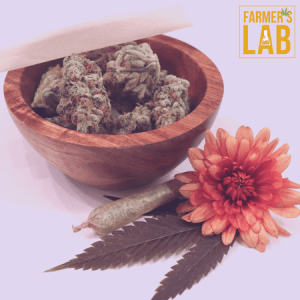 Weed Seeds Shipped Directly to Saint John, NB. Farmers Lab Seeds is your #1 supplier to growing weed in Saint John, New Brunswick.