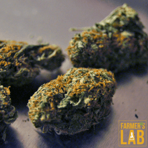 Weed Seeds Shipped Directly to Your Door. Farmers Lab Seeds is your #1 supplier to growing weed in Wyoming.