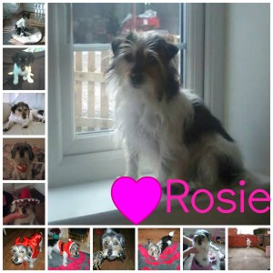 Rosie ill collage