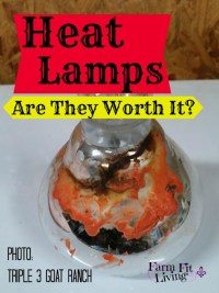 Heat Lamps: Are they worth it?