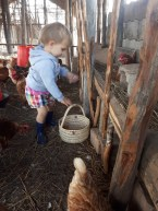 The kids help collecting eggs from a very young age