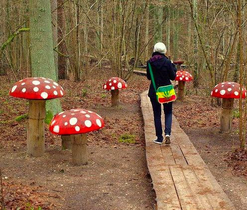 Wooden Forest Toadstools
