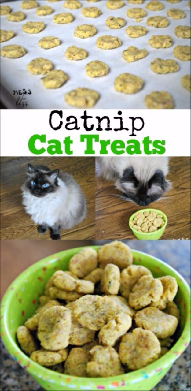 Catnip Cat Treats Recipe