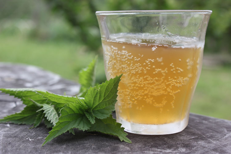 Nettle Beer Recipe