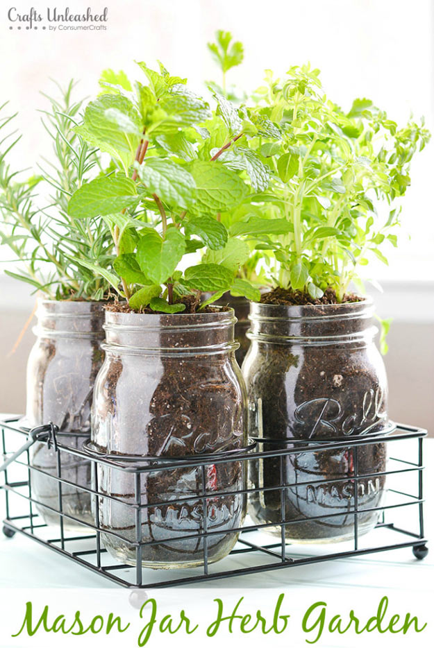Grow Herbs In A Jar