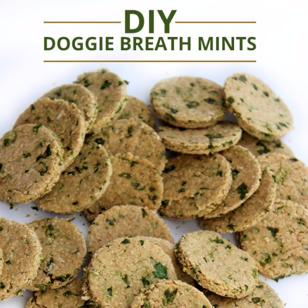 DIY Doggie Breath Mints
