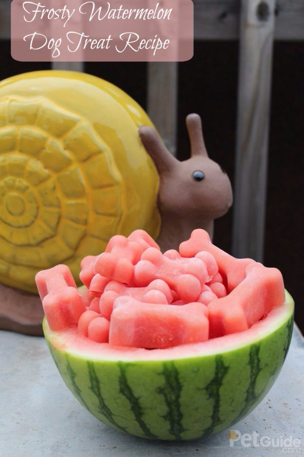 Frosty Watermelon Dog Treat Recipe