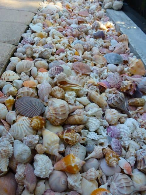 DIY Lawn Edging Ideas For Beautiful Landscaping: Sea Shell Edging Ideas