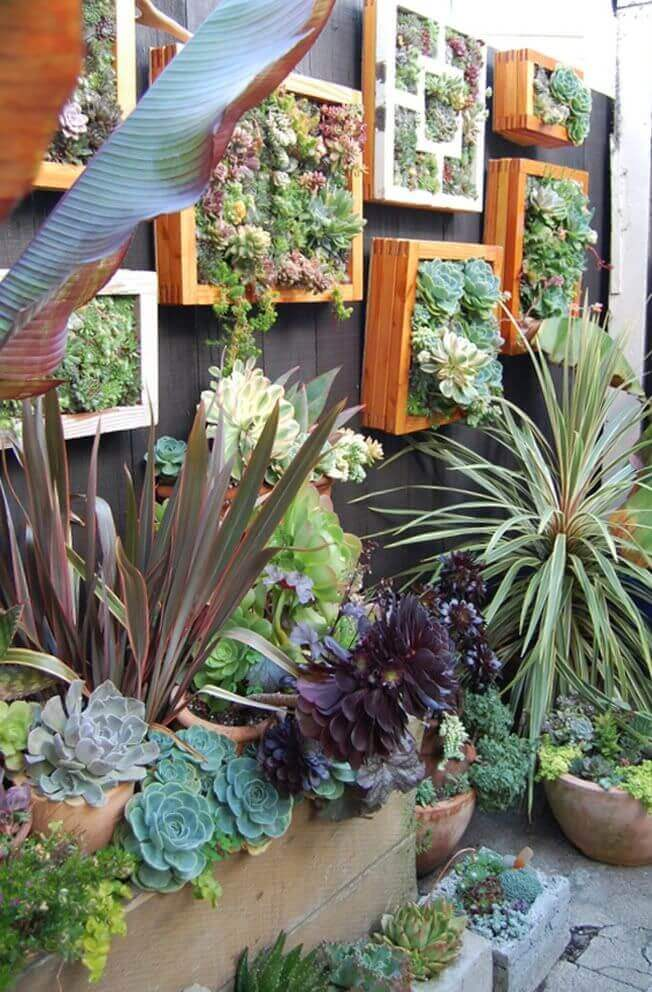 Succulents Overflowing from Framed Boxes