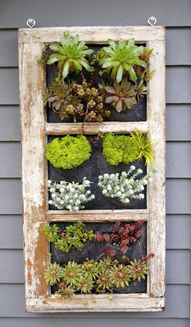 Succulents in a Window Frame