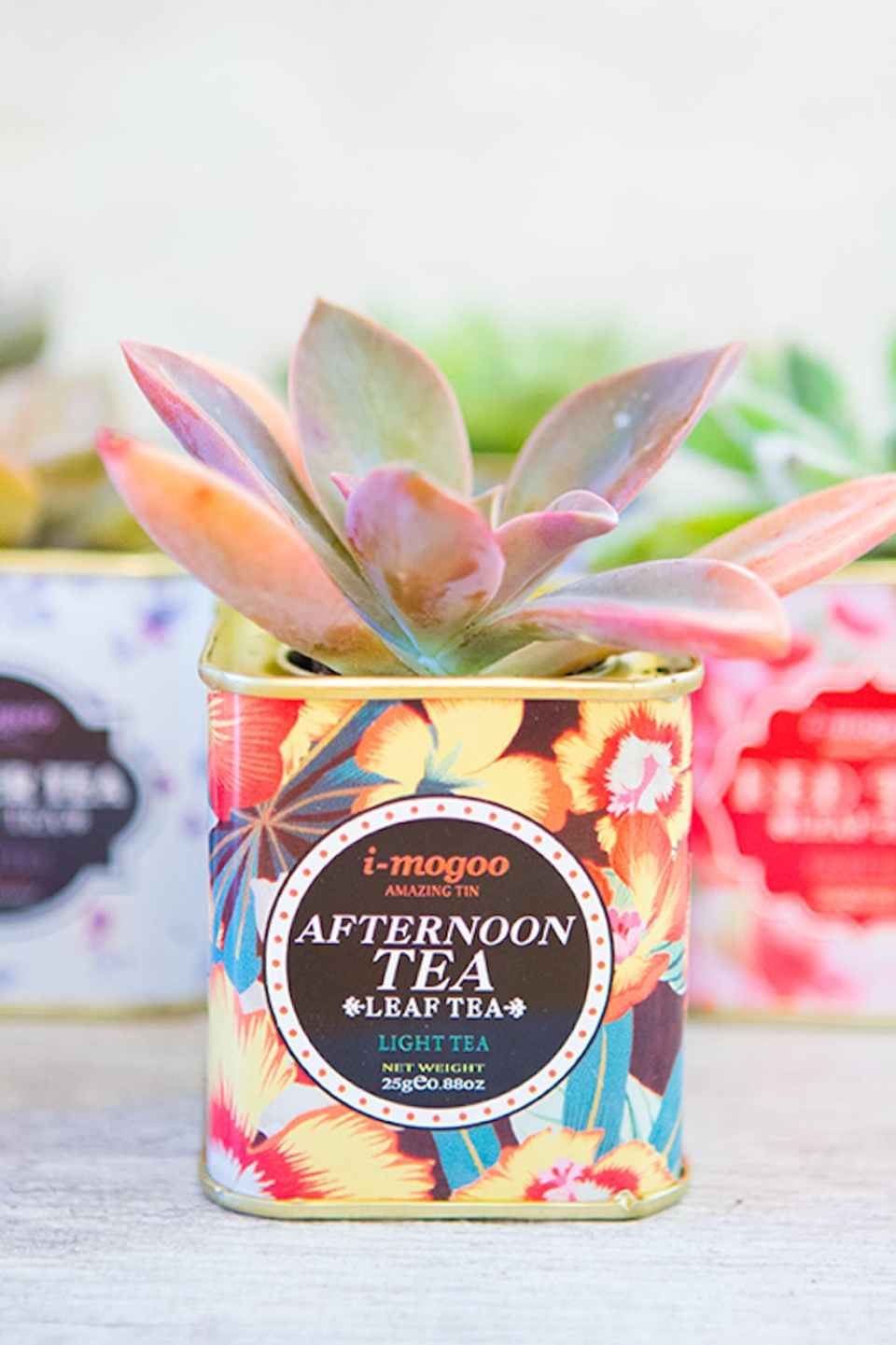 DIY Vintage Tea Tin Planters