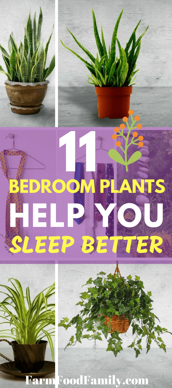 There's a simple fix that can make your bedroom more beautiful and more zzzz-inducing in one fell swoop. These 11 common houseplants can improve your nights and beautify your space.