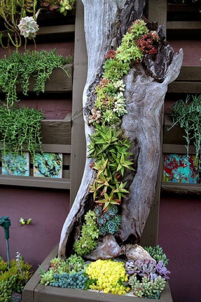 Succulent Garden Ideas: Highway To Heaven