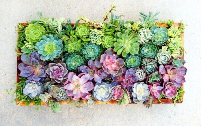 Succulent Garden Ideas: Over Finnian's Rainbow