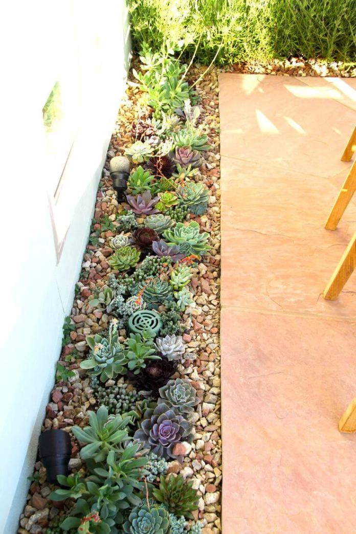 Succulent Garden Ideas: By The Wayside