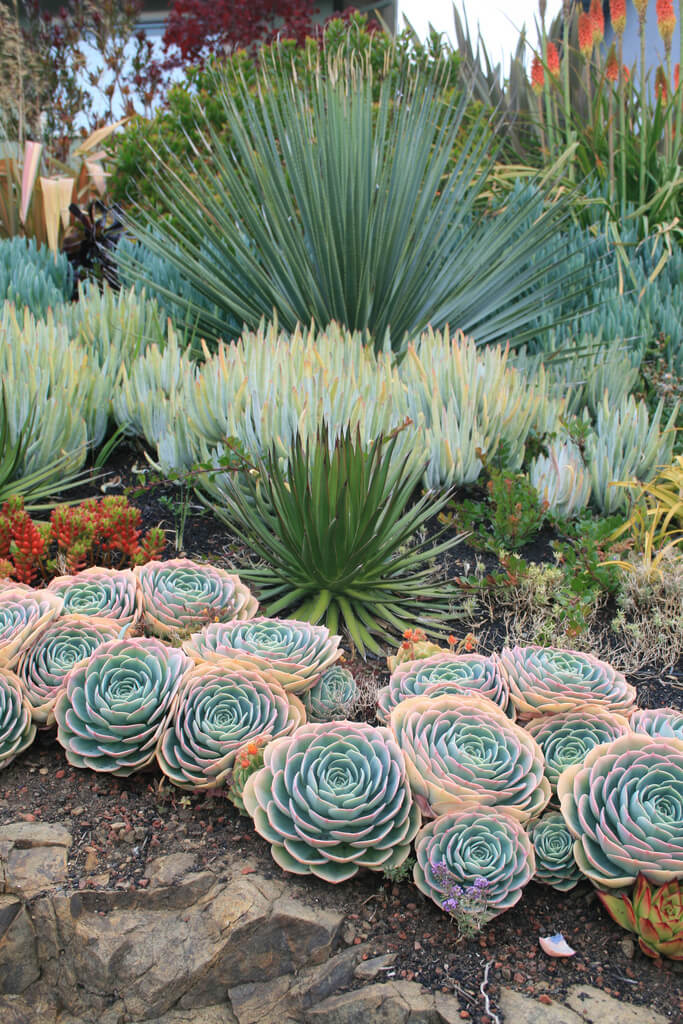 Succulent Garden Ideas: Rosebuds In The Desert