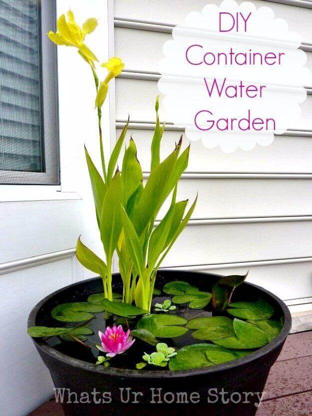 Tiny DIY Container Water Garden