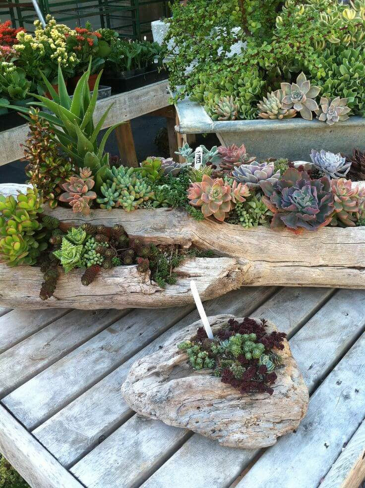 Succulent Garden Ideas: Wooden Wonderland