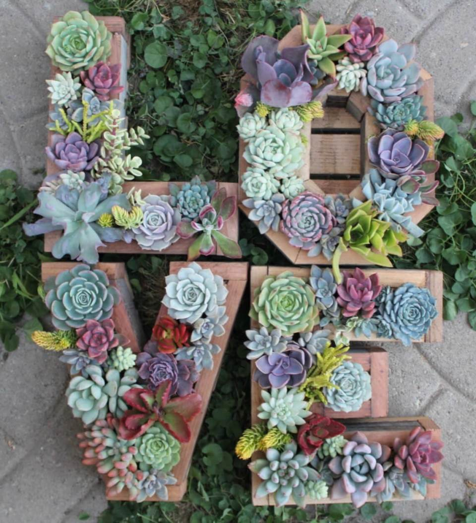 Succulent Garden Ideas: Slower Than Molasses