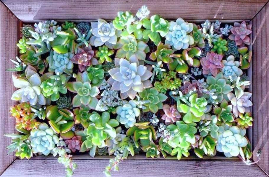 Succulent Garden Ideas: Up Against The Wall