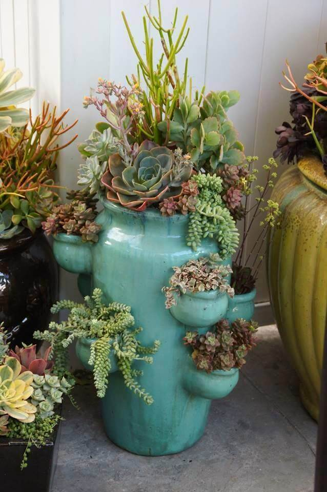 Succulent Garden Ideas: Blue Strawberry Fields