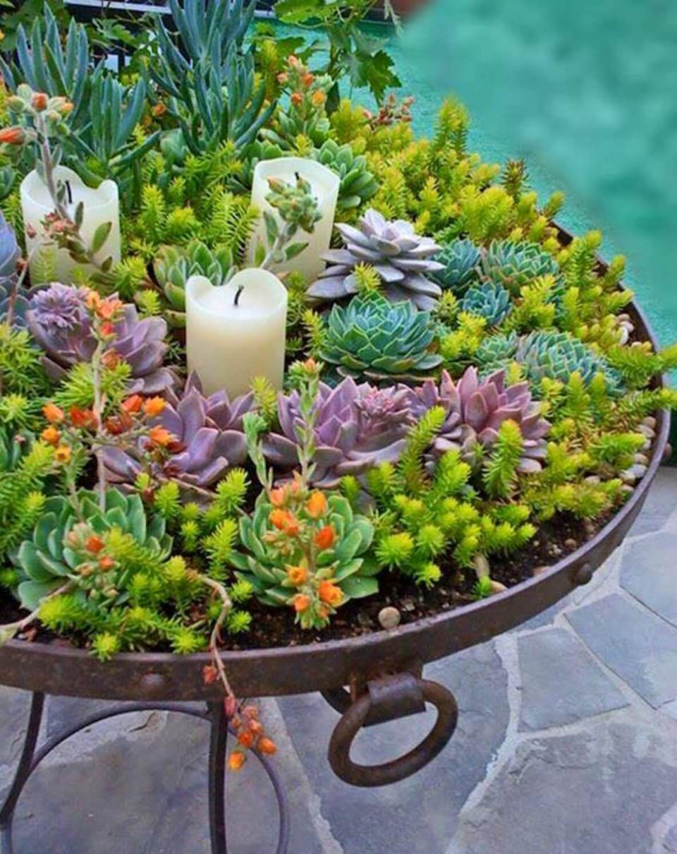 Succulent Garden Ideas: Garden of Life