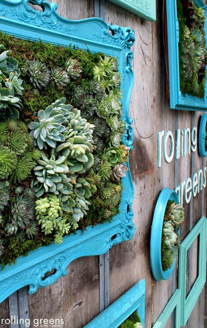 Succulent Garden Ideas: Framed Heirlooms