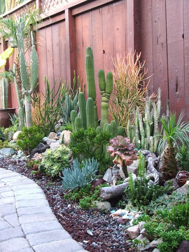 Succulent Garden Ideas: Skyscrapers In The Sun
