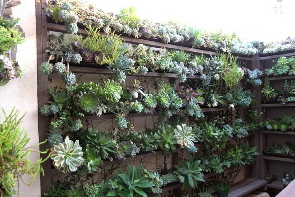 Succulent Garden Ideas: Vertical Madness