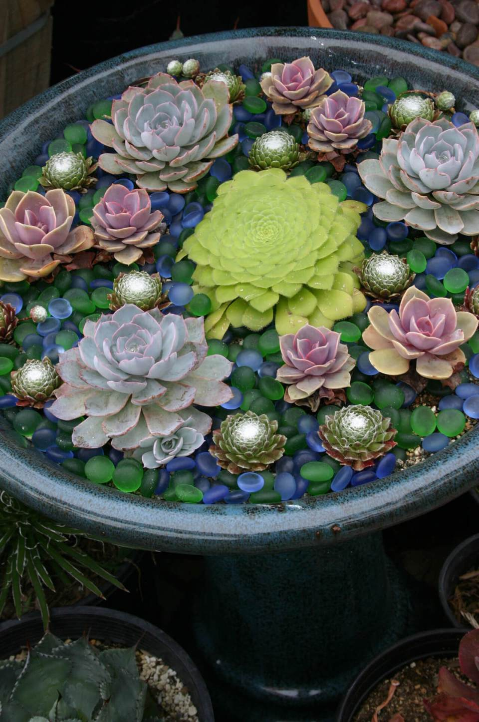 Succulent Garden Ideas: A Mid-Summer Night's Dream