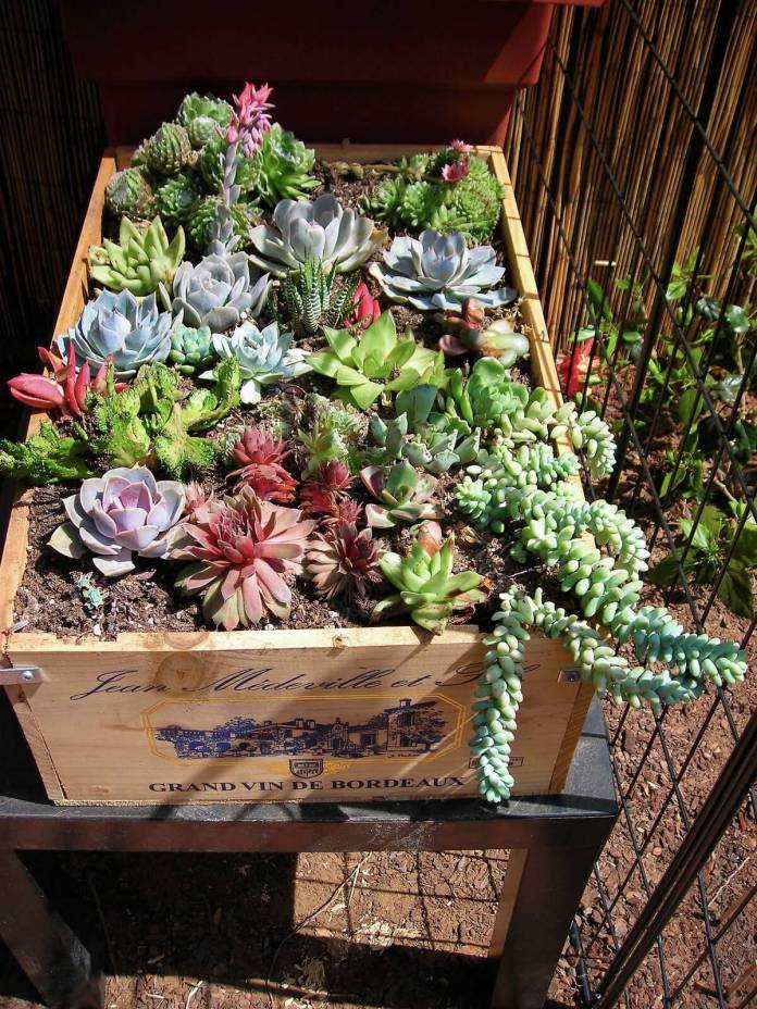 Succulent Garden Ideas: Out-Of-The Box Garden