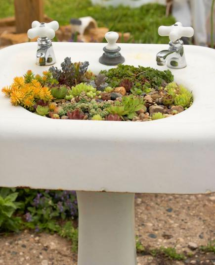 Sink of succulents
