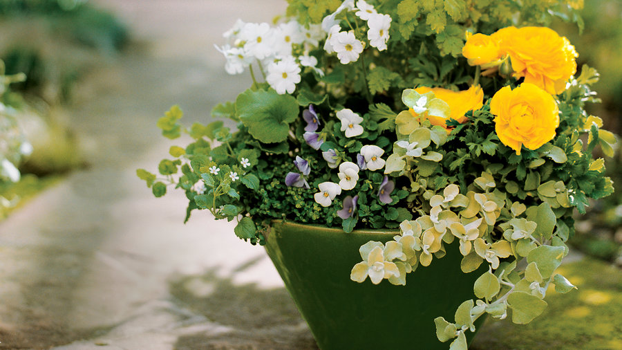 Planting ideas for garden pots