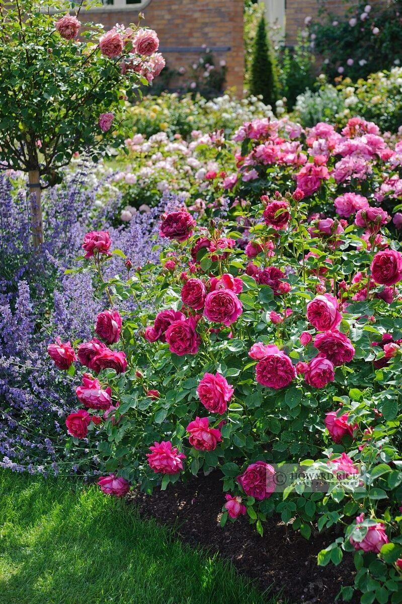 Flower Bed Ideas: Romantic Rose and Lavender Garden