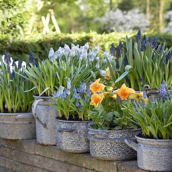 Old Pots and Pans as Planters