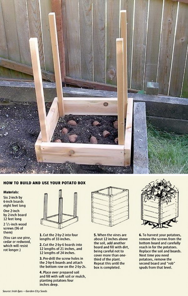 Grow 100 lbs. Of Potatoes In 4 Square Feet | Clever Gardening Ideas on Low Budget