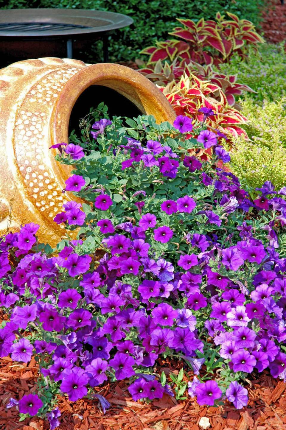 Petunias Overflowing from a Tilted Planter