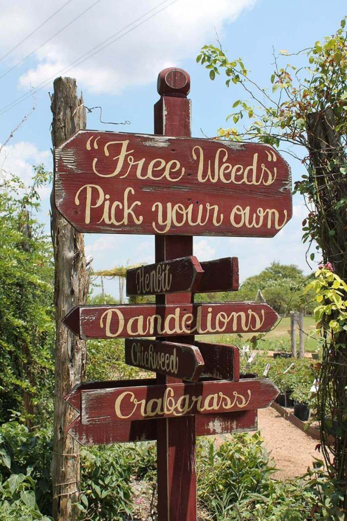Where in the World are the Weeds? | Funny DIY Garden Sign Ideas