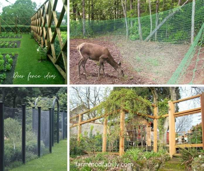 Creative and cheap deer fence ideas and designs