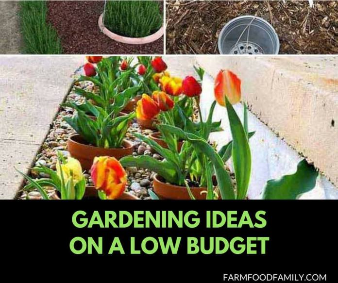 Cheap Gardening Ideas: 30+ Genius Gardening Ideas On Low Budget