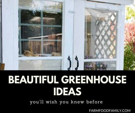 30+ Awesome DIY Greenhouse Designs & Ideas