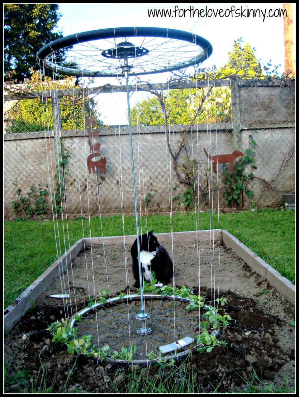 Recycled Tire Trellis   Up-cycled Trellis Ideas For Garden
