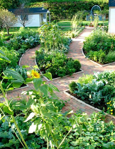 Raised Beds Lift the Garden | Edging Plants for Kitchen Gardens - FarmFoodFamily.com