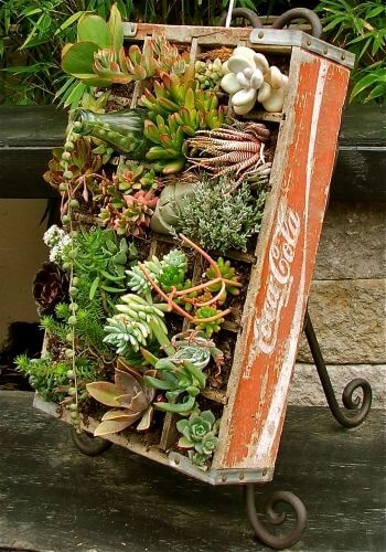 Succulents for indoor garden | Smart Mini Indoor Garden Ideas DIY - FarmFoodFamily.com