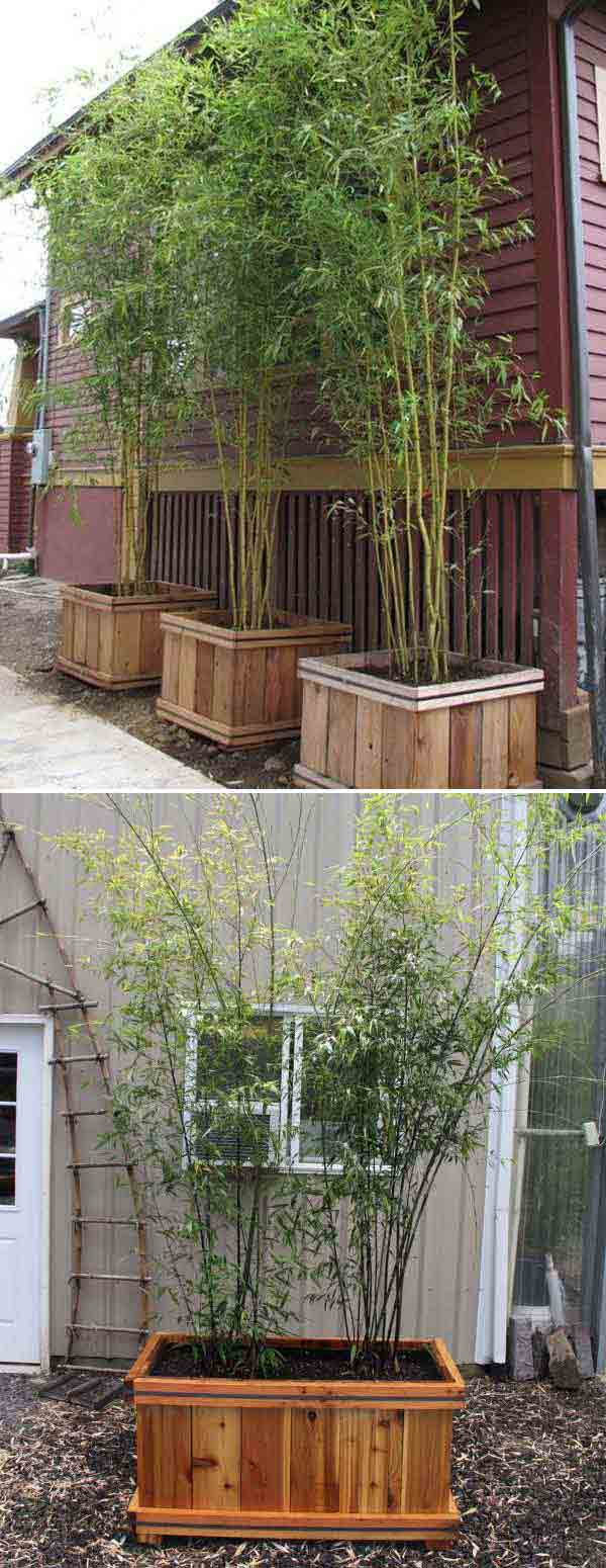 Bamboo Cedar Planters | Stunning Bamboo Craft Projects | FarmFoodFamily.com