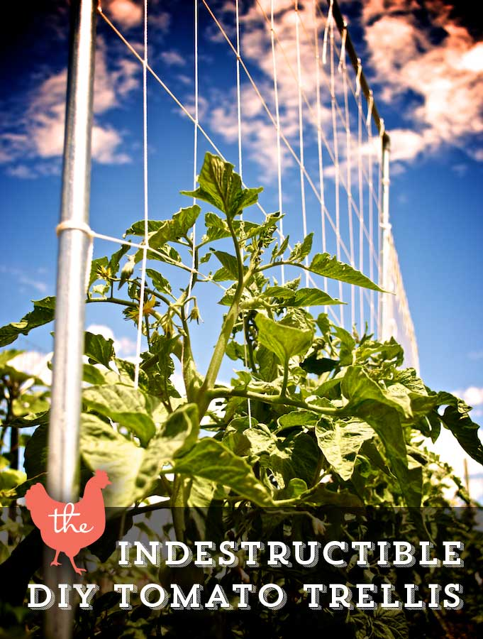 DIY Tomato Trellis | Up-cycled Trellis Ideas For Garden