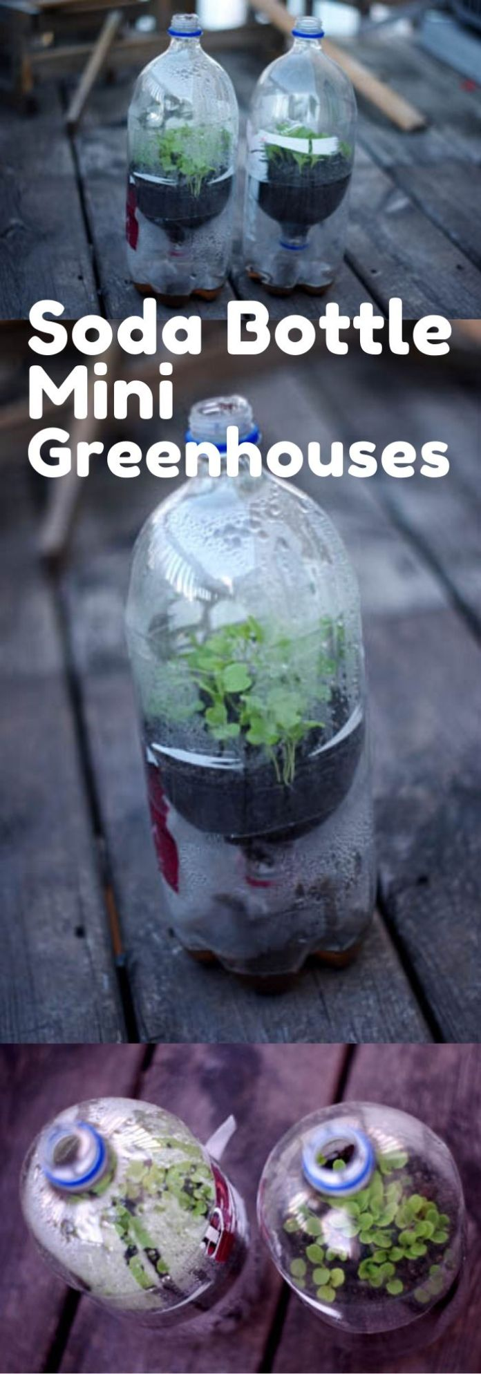 Soda Bottle Mini Greenhouses | Gardening Hacks and Trips