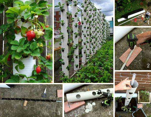 A vertical strawberry tube planter