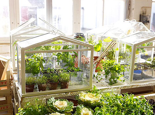 IKEA's Miniature Greenhouse | Smart Mini Indoor Garden Ideas DIY - FarmFoodFamily.com